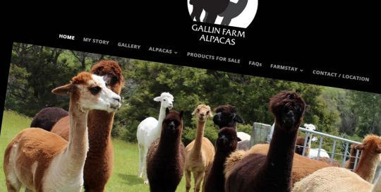 Gallin Farm Nectarine Portfolio Galinfarmalpacas Featured